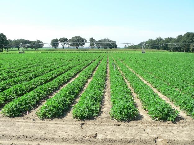 361063-crop-field
