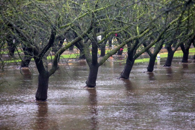ALMOND  ORCHARD FLOODING